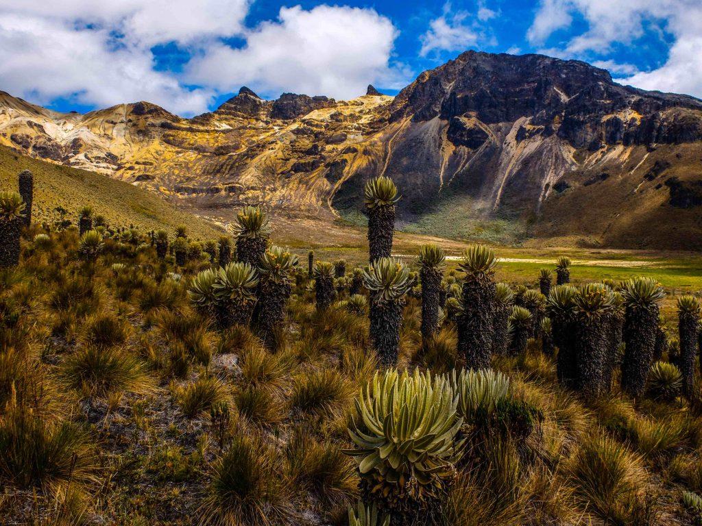 Paramillo-del-Quindio-near-Salento-Colombia-1024x768